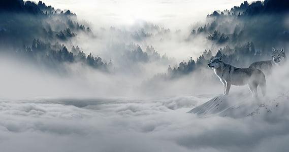雨后登惠山最高顶